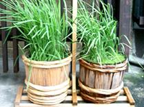 愛知県産の米100%を目指して。